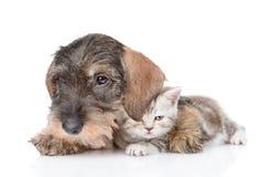 Gato del abarcamiento del perro Aislado en el fondo blanco Imagen de archivo