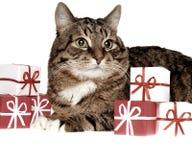 Gato del abeto del regalo Fotos de archivo