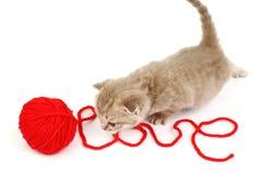 Gato del amor Foto de archivo libre de regalías