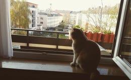 gato 2 del anacardo Imagen de archivo