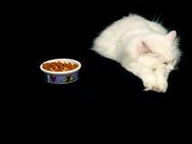 Gato del angora que no hace caso del alimento Foto de archivo