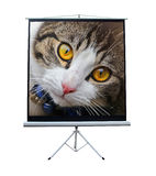 Gato del animal doméstico en la pantalla de proyector Fotos de archivo libres de regalías