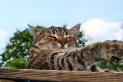 Gato del ataque Imagen de archivo