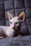 Gato del Bambino Imagen de archivo libre de regalías