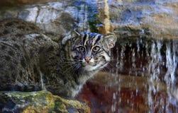 Gato del bastón Imagen de archivo libre de regalías
