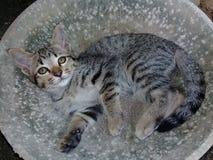 Gato del bebé imagen de archivo libre de regalías
