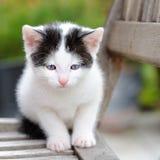 Gato del bebé Imagen de archivo