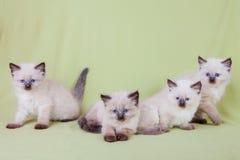 Gato del bebé Imagenes de archivo
