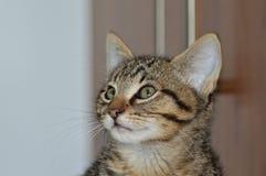 Gato del bebé Fotografía de archivo