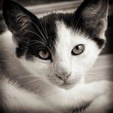 Gato del bebé blanco y negro fotografía de archivo