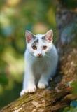Gato del bebé en aventura Imágenes de archivo libres de regalías