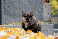 Gato del cementerio Imagen de archivo libre de regalías