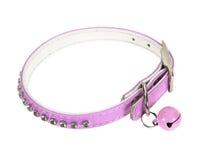 Gato del collar Imagen de archivo libre de regalías