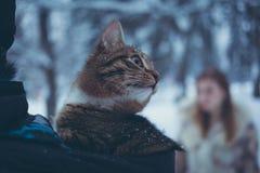 Gato del color del gato atigrado en la capilla de una chaqueta en un fondo borroso de una muchacha con el pelo que fluye foto de archivo