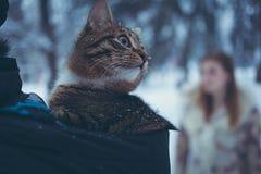 Gato del color del gato atigrado en la capilla de una chaqueta en un fondo borroso de una muchacha con el pelo que fluye imagenes de archivo