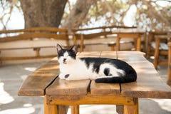 Gato del Cretan Foto de archivo libre de regalías