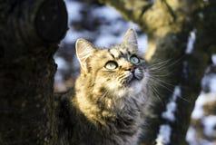 Gato del creyente Imagen de archivo libre de regalías