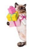 Gato del cumpleaños Foto de archivo