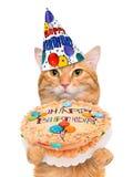 Gato del cumpleaños Fotografía de archivo libre de regalías