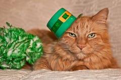 Gato del día de St Patrick Foto de archivo