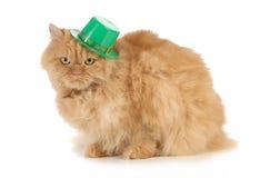Gato del día del St Patricks Imágenes de archivo libres de regalías