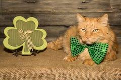 Gato del día del St Patricks Imagen de archivo libre de regalías