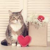 Gato del día de tarjetas del día de San Valentín Imágenes de archivo libres de regalías