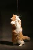 Gato del deportista Fotos de archivo libres de regalías