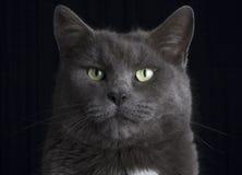 Gato del estudio Foto de archivo libre de regalías