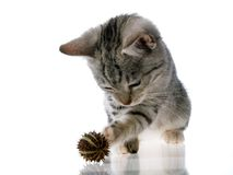 Gato del gatito Imagenes de archivo
