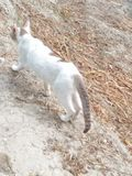 Gato del gatito imagen de archivo