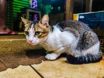 Gato del gatito fotos de archivo libres de regalías