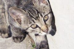 Gato del gatito de Cutte Foto de archivo libre de regalías