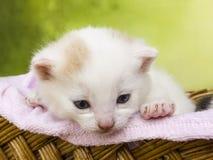 Gato del gatito que se sienta en una cesta Fotografía de archivo libre de regalías