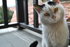 gato del gato fotos de archivo