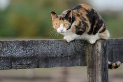 Gato del granero Imagen de archivo libre de regalías