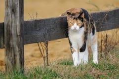 Gato del granero Imágenes de archivo libres de regalías