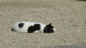 Gato del granero almacen de video