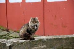 Gato del granero que se sienta en la pared de piedra vieja Imagenes de archivo