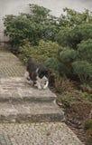 Gato del jardín Imagen de archivo