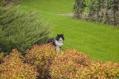 Gato del jardín Fotografía de archivo
