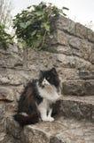 Gato del jardín Foto de archivo