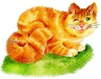 Gato del jengibre stock de ilustración