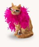 Gato del jengibre con la boa de plumas (y la sombra) Imagenes de archivo