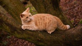 Gato del jengibre en el bosque Imagenes de archivo