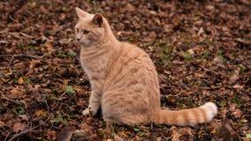 Gato del jengibre en el bosque Imagen de archivo