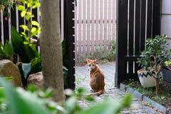 Gato del jengibre en el jard?n imagenes de archivo