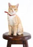 Gato del jengibre en silla fotos de archivo libres de regalías