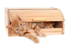 Gato del jengibre en una caja del pan fotos de archivo libres de regalías