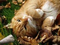 Gato del jengibre entre las hojas de otoño foto de archivo